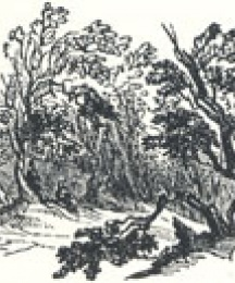 Woodland Scenery, Tailpiece to Robin Hood and the Stranger