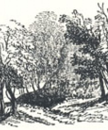 Woodland Scenery, Tailpiece to Robin Hood and the Butcher