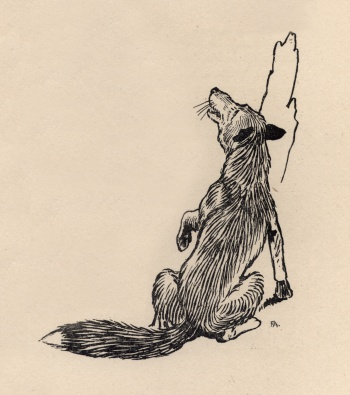 Marginal illustration of the fox