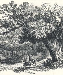 Woodland Scenery, Headpiece to A Tale of Robin Hood