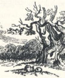 Woodland Scenery, Tailpiece to A Tale of Robin Hood