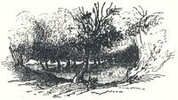 "Woodland Scenery, Tailpiece to ""Robin Hood and the Shepherd"""
